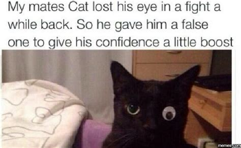 Lost Cat Meme - my mates cat lost his eye memes com