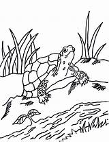 Coloring Turtle Pages Box Grass Printable Getdrawings Today Reference Samantha Samanthasbell sketch template
