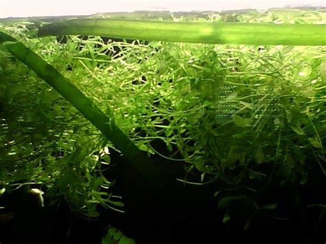 vd 63 ou envoi plante a bouturer ou surface ludovic63