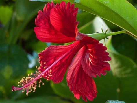 Fleurs Antioxydantes