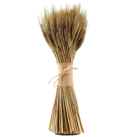 Natural Dried Wheat Bundle - Halloween - Holiday Crafts - Factory Direct Craft