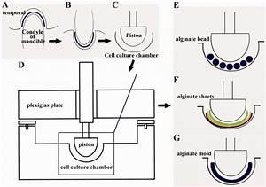 Study Design For Development Of Biomimetic Bioreactor And Scaffolding