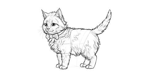 drawn feline kitten pencil   color drawn feline kitten
