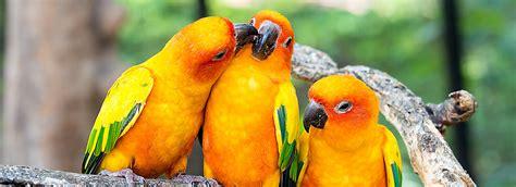 The Best Pet Bird Types
