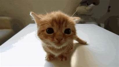 Cutest Kitten Cat Exclamation Yoda Mark Bragging