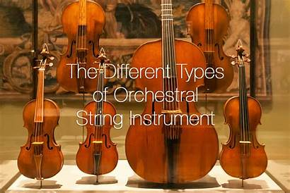 String Orchestral Instrument Types Different Instruments Strings