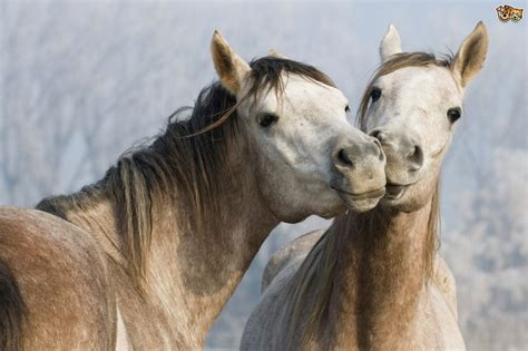 demystifying equine terms  phrases petshomes