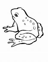 Frog Coloring Pages Printable Tree Clip Sheets Animal Drawing Animals Green Hop Computer Piggy Miss Awesome Frogs Magnificent Template Print sketch template