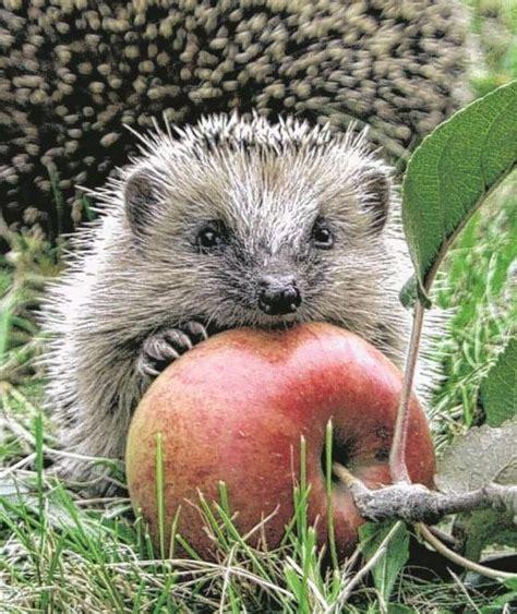 Igel Im Garten Herbst by So Helfen Sie Garten Tieren Durch Den Winter Igel Hilfe
