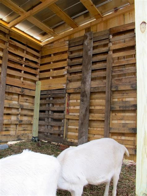 diy project goat pallet barn home design garden