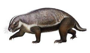 Marooned on Mesozoic Madagascar SBU News