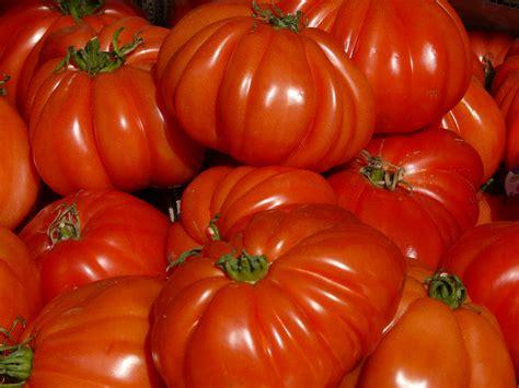 pomodori cuore di bue in vaso al mercato cercate i pomodori cuore di bue con la bottarga