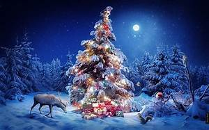 Beautiful Snowy Pictures of Christmas Trees for Greetings ...