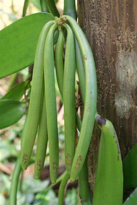 como crecen frutas verduras  especies en la tierra