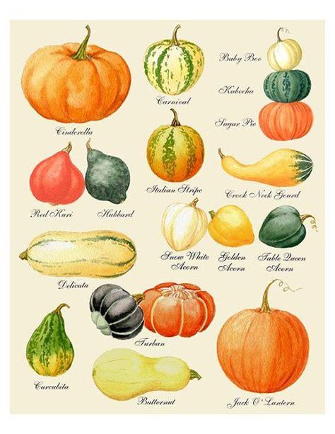 types of pumpkins pumpkin print pumpkin art pumpkin chart print harvest print autumn print thanksgiving