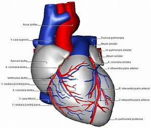 33 Label The Following Diagram Of The Heart