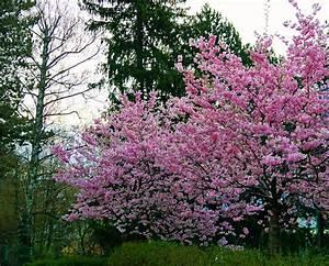 Rosa Blühende Bäume April : rosa bl tentraum kufstein ~ Michelbontemps.com Haus und Dekorationen