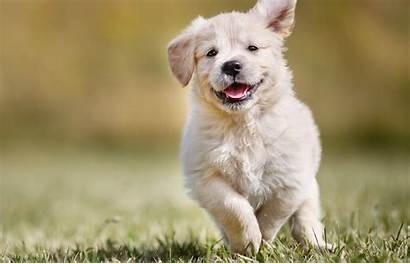 4k Dog Puppy Wallpapers Animals Walls