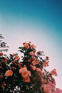 joyful grace flower aesthetic flowers