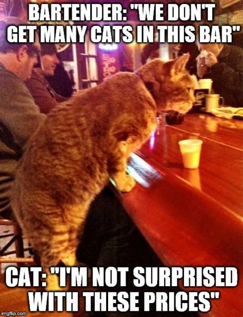 Bar Memes - cat bar drinking imgflip