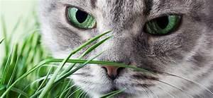 Was Brauchen Katzen : brauchen katzen katzengras ~ Lizthompson.info Haus und Dekorationen