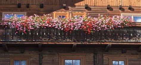 Balkon Bepflanzen Tipps by Blumenbibel De