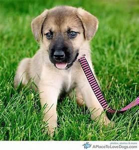 Husky Beagle mix :)   puppy love   Pinterest