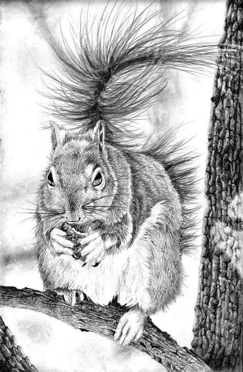 chipmunk squirrel images  pinterest art