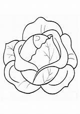 Coloring Cabbage Repolho Colorir Simples Desenhos Colorironline Verde sketch template