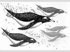 Penguin Swimming Clipart ClipartXtras