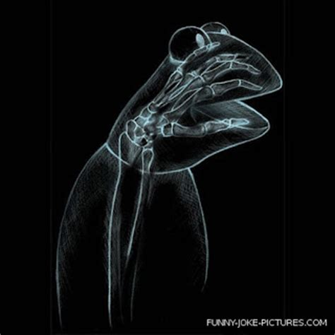 X Ray Collection ~ Funny Joke Pictures