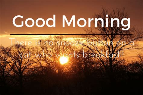Good Morning Wishes Quotes And Messages Free Whatsapp