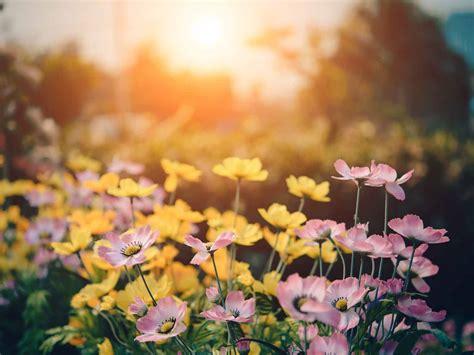 Was Ist Trend by Gardening 2019 Was Ist Dieses Jahr Trend Und Im Garten