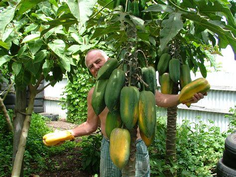 Forum Rareunusual Fruit Plants