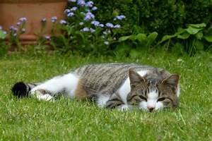 Wie Fange Ich Eine Katze : wie sich eine kleine katze eine familie aussucht fr hlingsmensch ~ Markanthonyermac.com Haus und Dekorationen