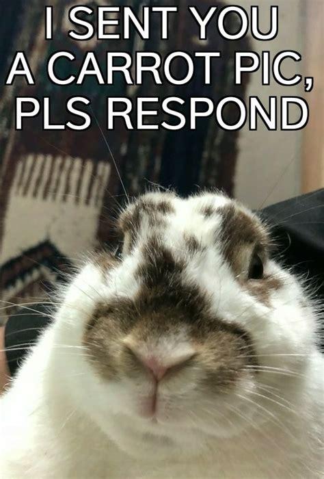 Silly Rabbit Meme The Best Rabbit Memes Memedroid