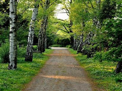 Scenery Natural Desktop Wallpapers Road Tree Dirt