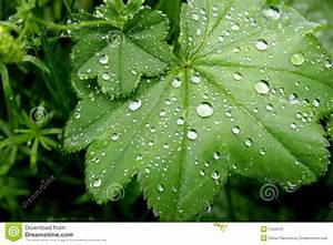 Green Leaves With Water Drops Stock Photography - Image ...