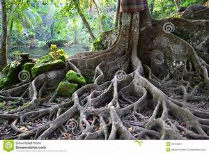 Unusual, Tree, With, Great, Roots, Stock, Image