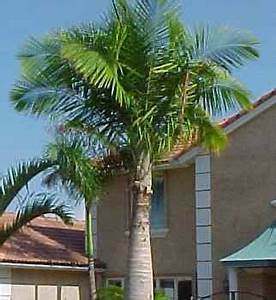 Azusa Light And Water Hours Majesty Palms Garden View Landscape Nursery Pools
