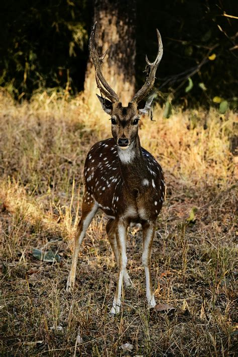 white spotted deer lying green grass stock photo