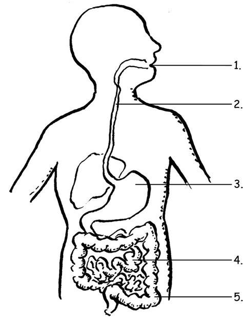 image result  label  digestive system  grade