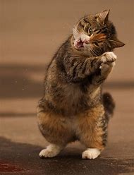 Funny Cat Happy Dance