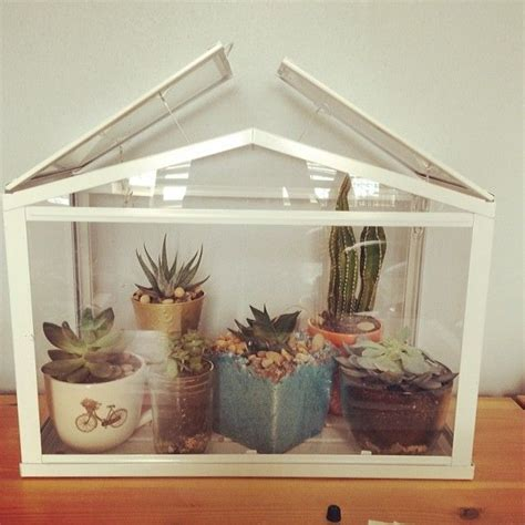 Ikea Mini Gewächshaus by Adorable Succulents In Mini Greenhouse From Ikea