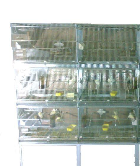 la gabbia forum gabbia modulare il forum di avifauna club degli allevatori