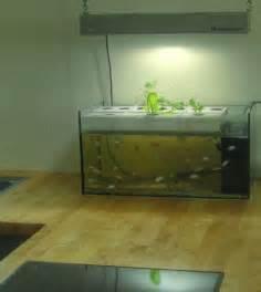Small Fish Tank Aquaponics