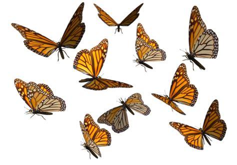 Swarm of Butterflies Clipart (4+)