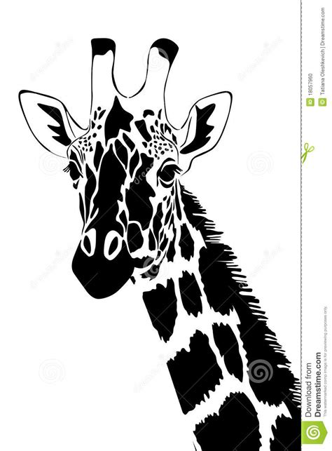 Brown and black lion painting, tiger watercolor painting drawing, tiger transparent background png clipart. Giraffe In Black And White Stock Photo - Image: 18057960