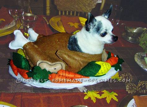 100+ Ideas To Try About Pet Halloween Costumes