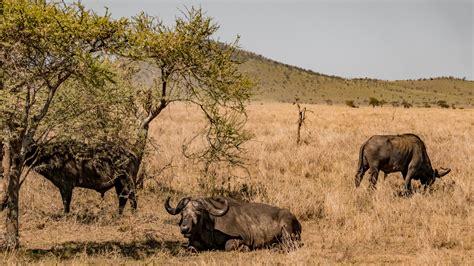 2 Days safari in Mikumi National Park from Dar es Salaam